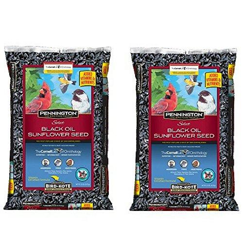 Pennington Select Black Oil Sunflower Seed Wild Bird Feed, 20 lbs (Pack of 2)