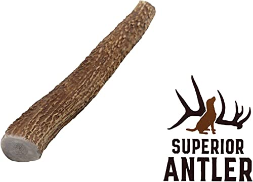 1-Medium Elk Antler Single Pack. All Natural Premium Grade A. Antler Chew. L 5-8 Naturally shed, Hand-Picked, and Made in The USA. NO Odor, NO Mess. Guaranteed Satisfaction. for Dogs 20-45 LBS