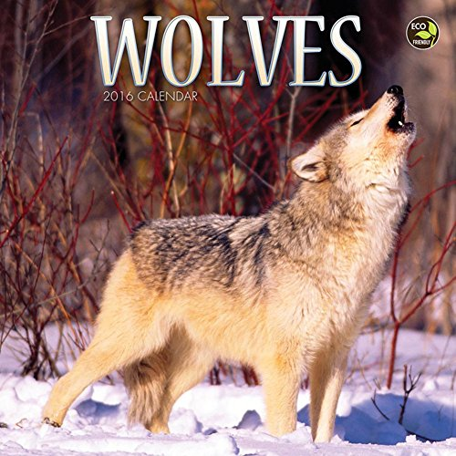 2016 Wolves Small Wall Calendar