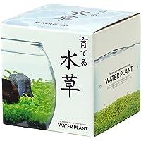 聖新陶芸 育てる水草