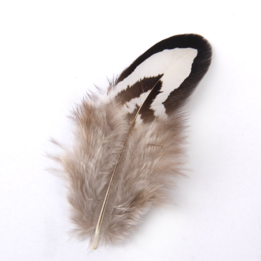 50pcs Chicken Feathers for Craft Mask Hat 2-7cm