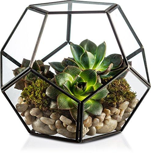 KooK Geometric Glass Terrarium, Eloquent Design, Plants, Succulents, Votive Candle Holder (Black) ()