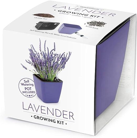 Domestico Kit de Lavanda para cultivar, Lavender growing kit, All ...