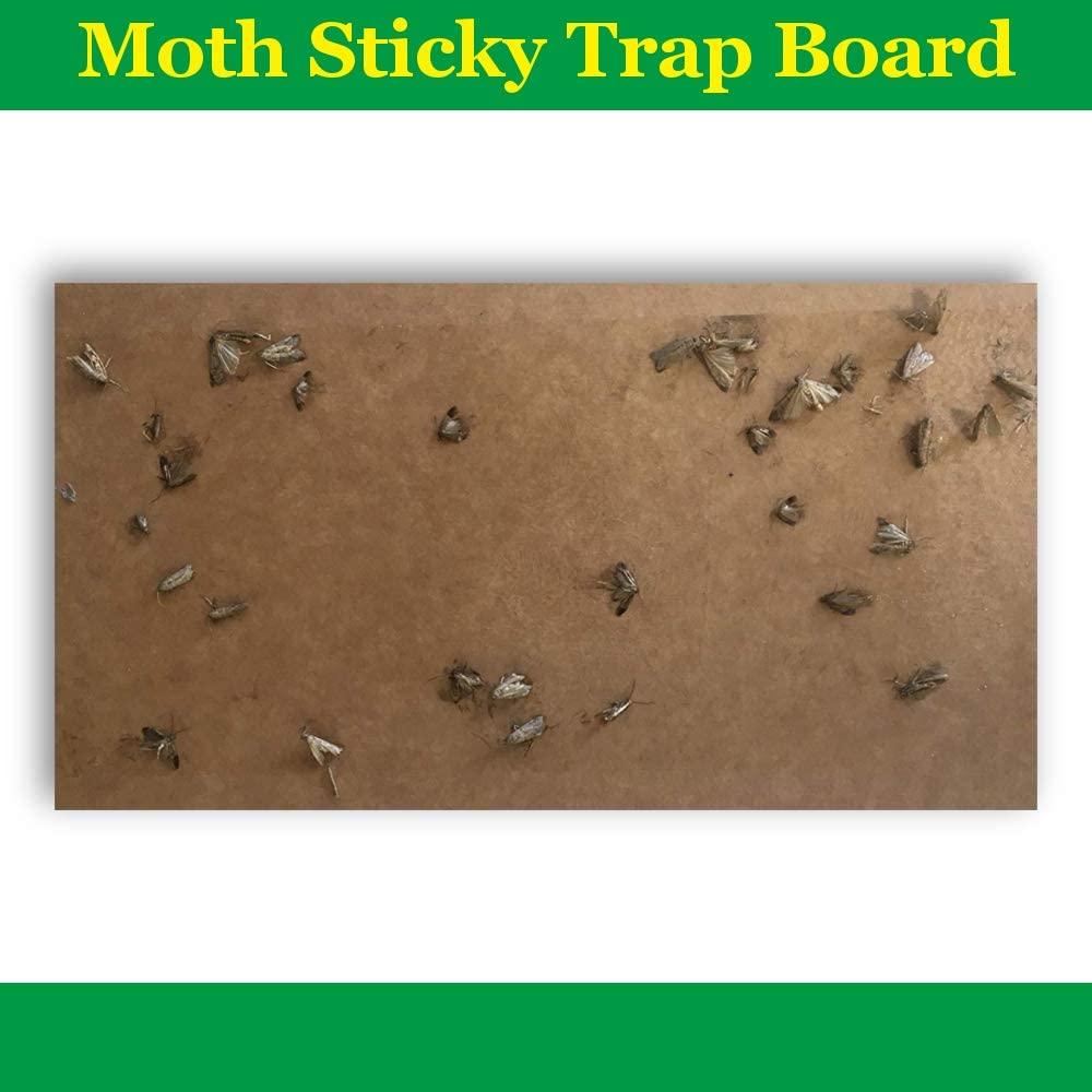 Results Guaranteed Rate Traps on the Market Toxic Most Effective Catch Natural /& Odorless Sticky Moth Killer Clothes Moth Trap Pheromone Moth Traps Refillable /& Non 3 Pack