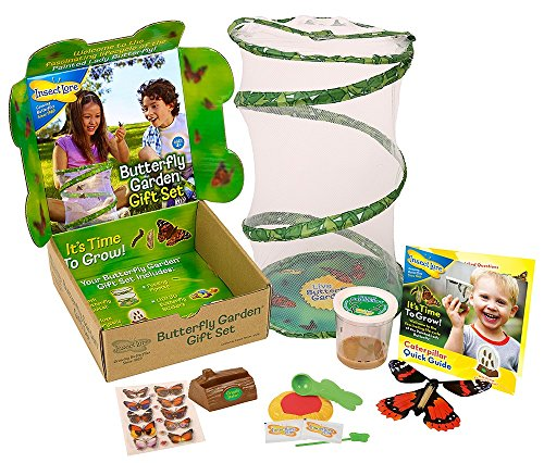 Live Butterfly Caterpillars (Insect Lore Deluxe Butterfly Garden Gift Set with Live Cup of Caterpillars Habitat)