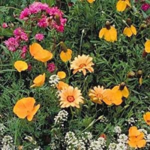 Southwest Wildflower Seed Mix ( 1 oz Seed) Covers approximately 125 square feet