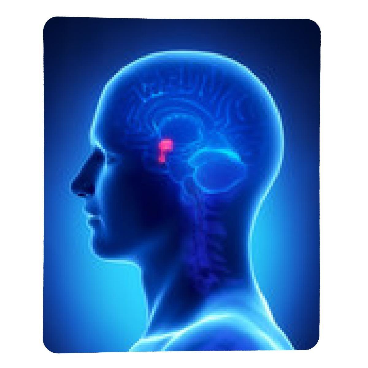 My Puzzle Design Brain Anatomy Pituitary Gland Cross Amazon