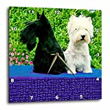 Dogs Scottie And Westie – Scottie And Westie – 10×10 Wall Clock (dpp_506_1) For Sale