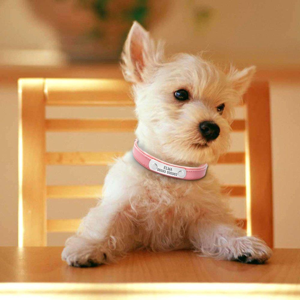 con grabado personalizado Collar de perro Berry de piel bonito y acolchado