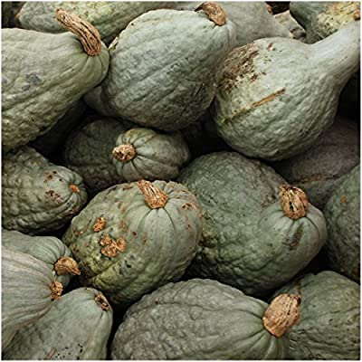 Package of 20 Seeds, True Green Hubbard Winter Squash (Cucurbita pepo) Non-GMO Seeds by Seed Needs
