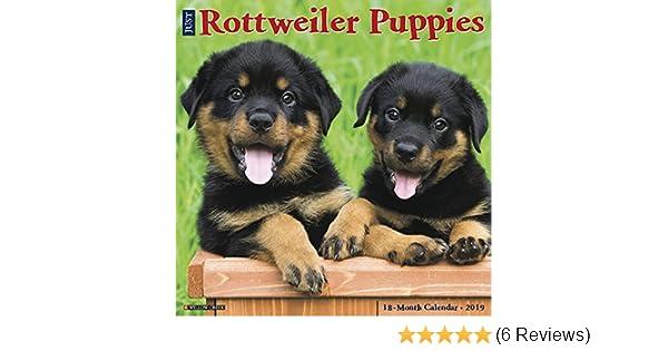 Just Rottweiler Puppies 2019 Wall Calendar (Dog Breed Calendar)