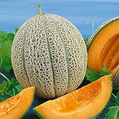 Cantaloupe Melon Garden Seeds - Hales Best Jumbo - Non-GMO, Heirloom, Vegetable Gardening Seeds - Fruit