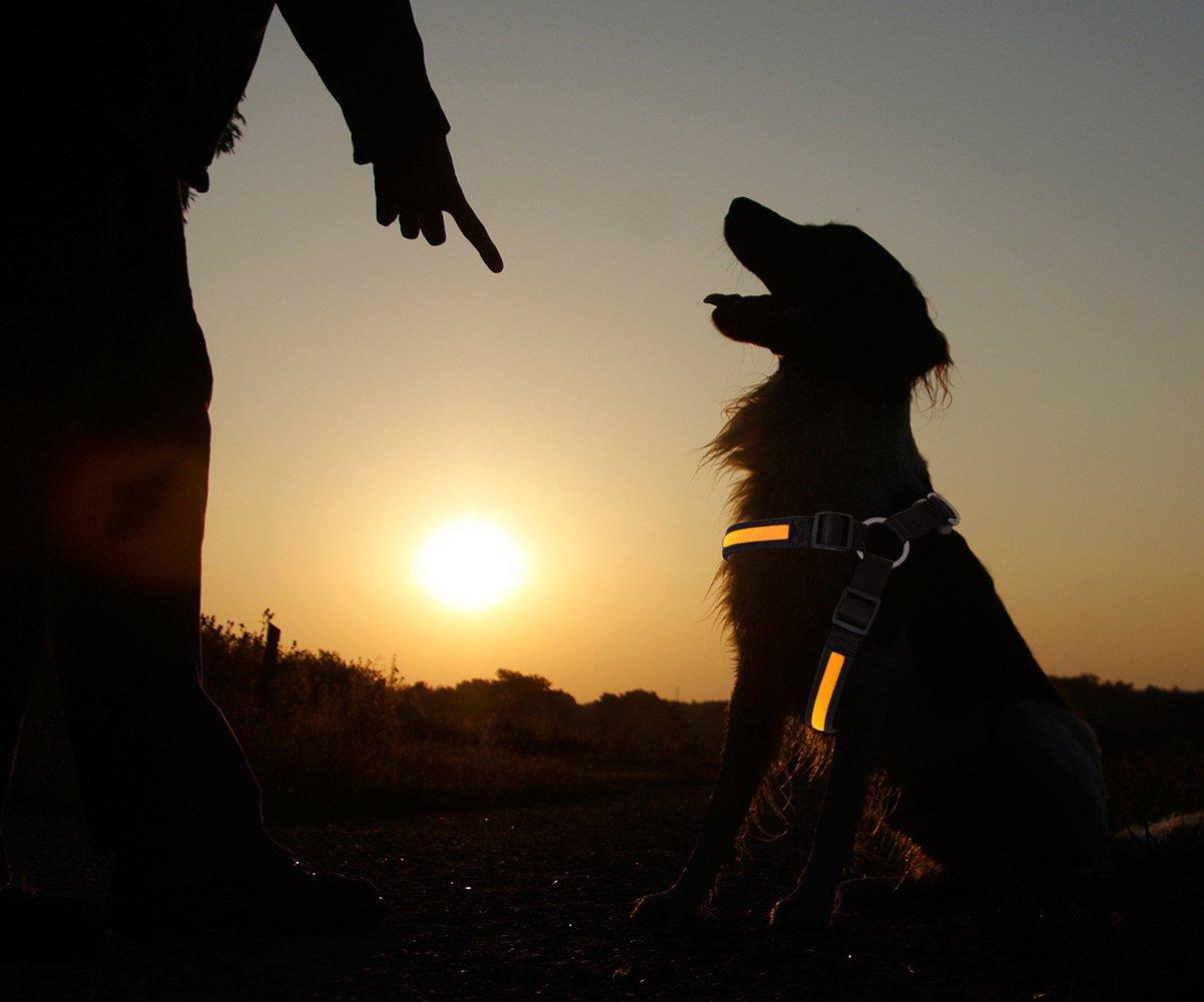 Pettorina LED Pettorina per cane Collare luminoso Pettorina luminosa per cane gatto animale domestico di colore arancione misura L Pettorina di sicurezza completa di batterie marchio PRECORN