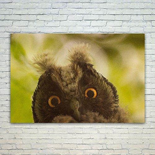Westlake Art Poster Print Wall Art - Beak Fauna - Modern Pic