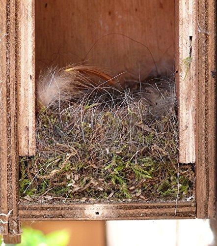 Home Comforts LAMINATED POSTER Bird's Nest Inside Nest Building Poster Print 24x36 Decal (Bird Building Nest)