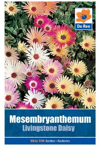 Mesembryanthemum Livingstone Daisy by Bulbs and Seeds - Shopping Livingstone