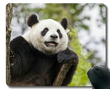 Yanteng Gaming Mouse Pad con Borde Cosido, Panda Animal de ...