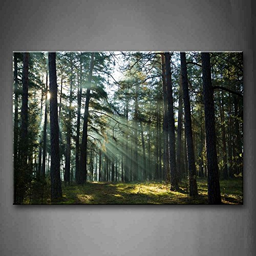 First Wall Art - Sunshine Through Forest Wall Art Painting Pictures Print On Canvas Landscape The Picture For Home Modern Decoration by Firstwallart