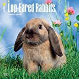 Lop Eared Rabbits 2018 12 x 12 Inch Monthly Square Wall Calendar, Domestic Small Pets Animals (Multilingual Edition)