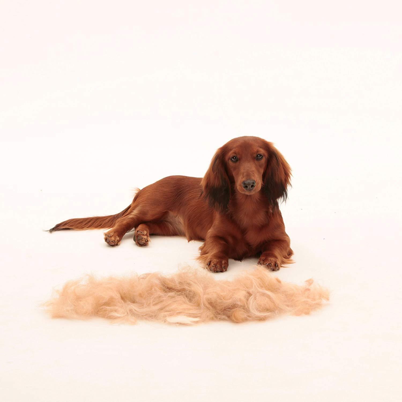 medianos y Grandes para el Cabello Corto y Largo Qiluck Cepillo de Aseo para Mascotas Perros y Gatos peque/ños