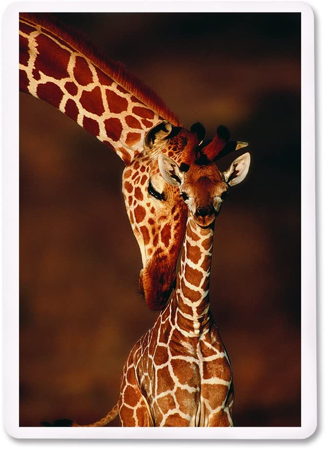 Details about  / TWO WALKING GIRAFFES Full Deck PLAYING CARDS New /& Original 52+2 Jokers L@@K!