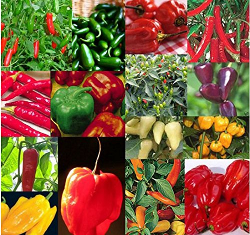 Peppers Planter - Mr.seeds Mix 50 seeds / pack chili pepper seeds, vegetable seeds, flower pots and planters.