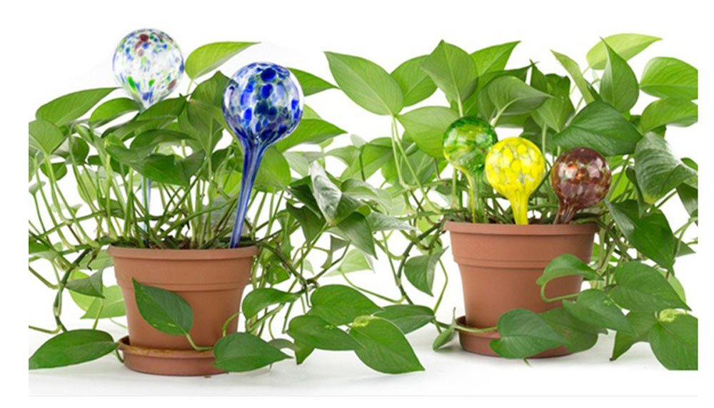 Lautechco 3pcs 200ml Water Ball Plant Automatic Watering Glass Bulbs Flower Drip Irrigation Tools (Random Color) by Lautechco® (Image #3)