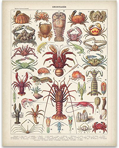 French Crustaceans Art Print - 11x14 Unframed Art Print - Great Beach House Wall Decor
