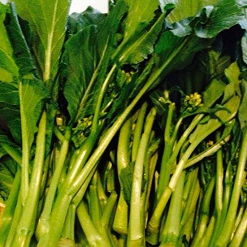 150 Seeds of Brassica rapa var. parachinensis - Yu Choy Sum. Delicious Heirloom Flowering Chinese Green from the Bok Choy Family. 30/50 - Bok Choy Green