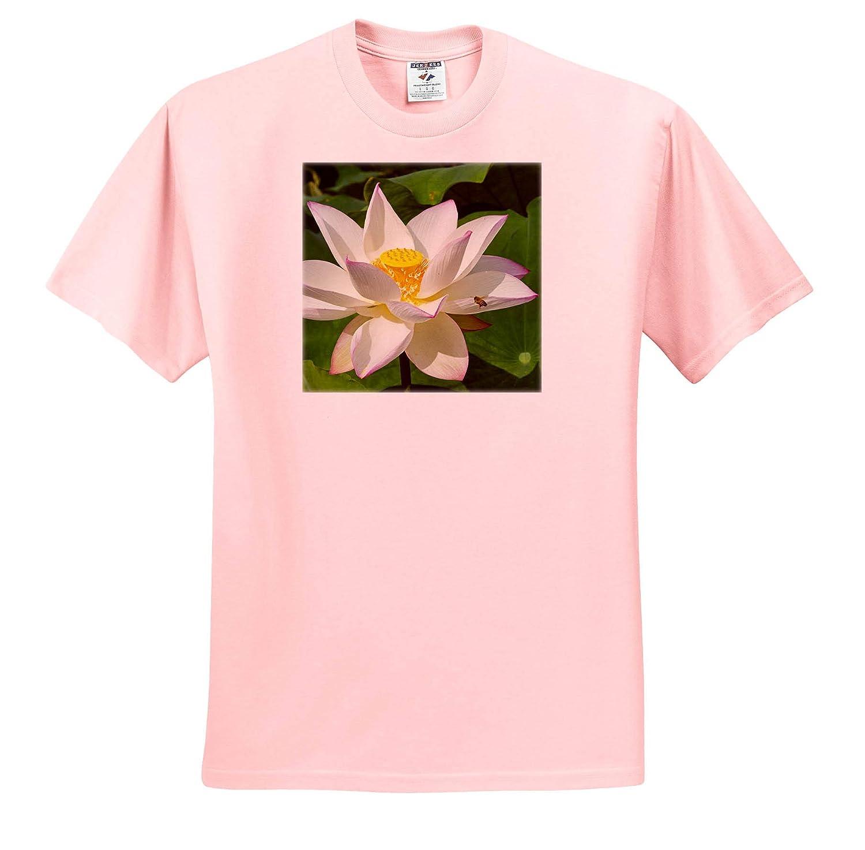 Flowers Kyoto 3dRose Danita Delimont Japan ts/_312766 Lotus Flower Adult T-Shirt XL