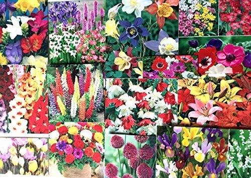 ScoutSeed 3X Etiquetas DE Plantas/Semillas: Jardin Flores ...