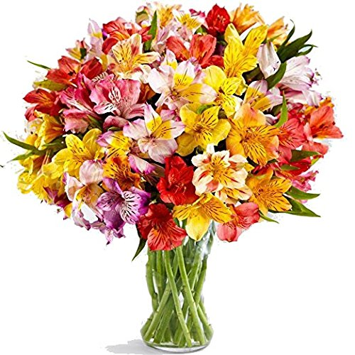 100 Blooms for Valentine - 25 Stems of Peruvian Lilies Fresh from the Farm with 7 day Freshness Guarantee, with Free Clear Vase