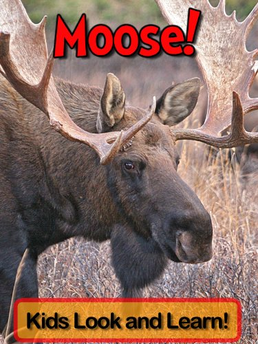 Moose! Learn About Moose and Enjoy Colorful Pictures - Look and Learn! (50+ Photos of Moose)