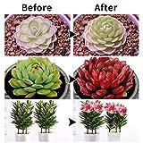Winjoy Grow Light, 30W LED Grow Lamp Bulbs Plant
