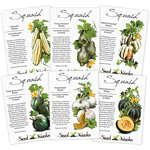 Lot of 6 Individual Winter Squash Seed Packets (Cucurbita pepo) Non-GMO Seeds by Seed Needs