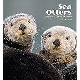 Sea Otters 2016 Wall Calendar