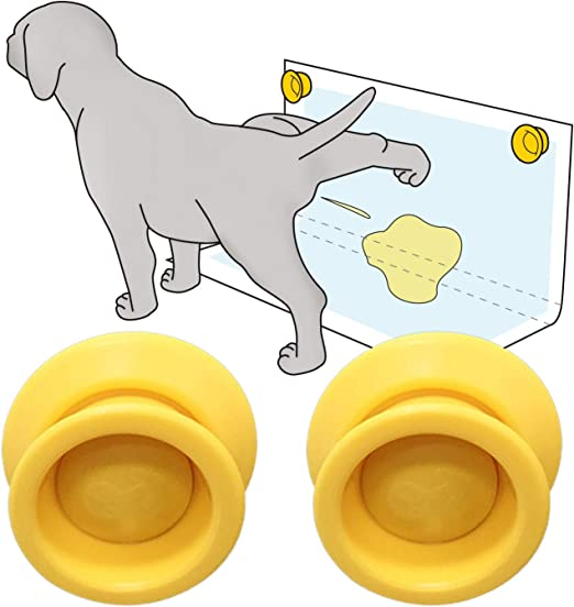 cat urination never-endingly wall