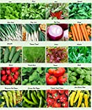 Set of 20 Assorted Organic Vegetable Seeds & Herb