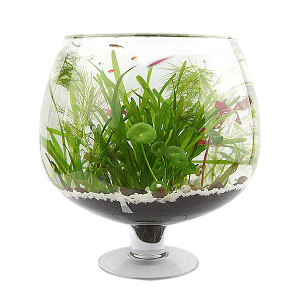 27CM JIANGU Transparent Glass Fish Tank Wine Glass Tall Vase Home Living Room Water Culture Fish Glass Aquarium (27CM)