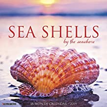 Sea Shells 2019 Wall Calendar