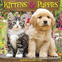 Kittens & Puppies 2019 Wall Calendar