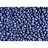Hot Selling 30pcs/lot Blueberry Seeds Fruit Seeds Bonsai Pot Plant DIY Fruit Seeds