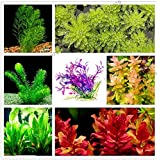 10:100本/袋混合種の水草水槽アクアリウムの装飾草の種子A