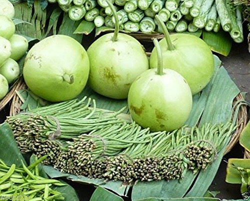 Asian vegetable seed
