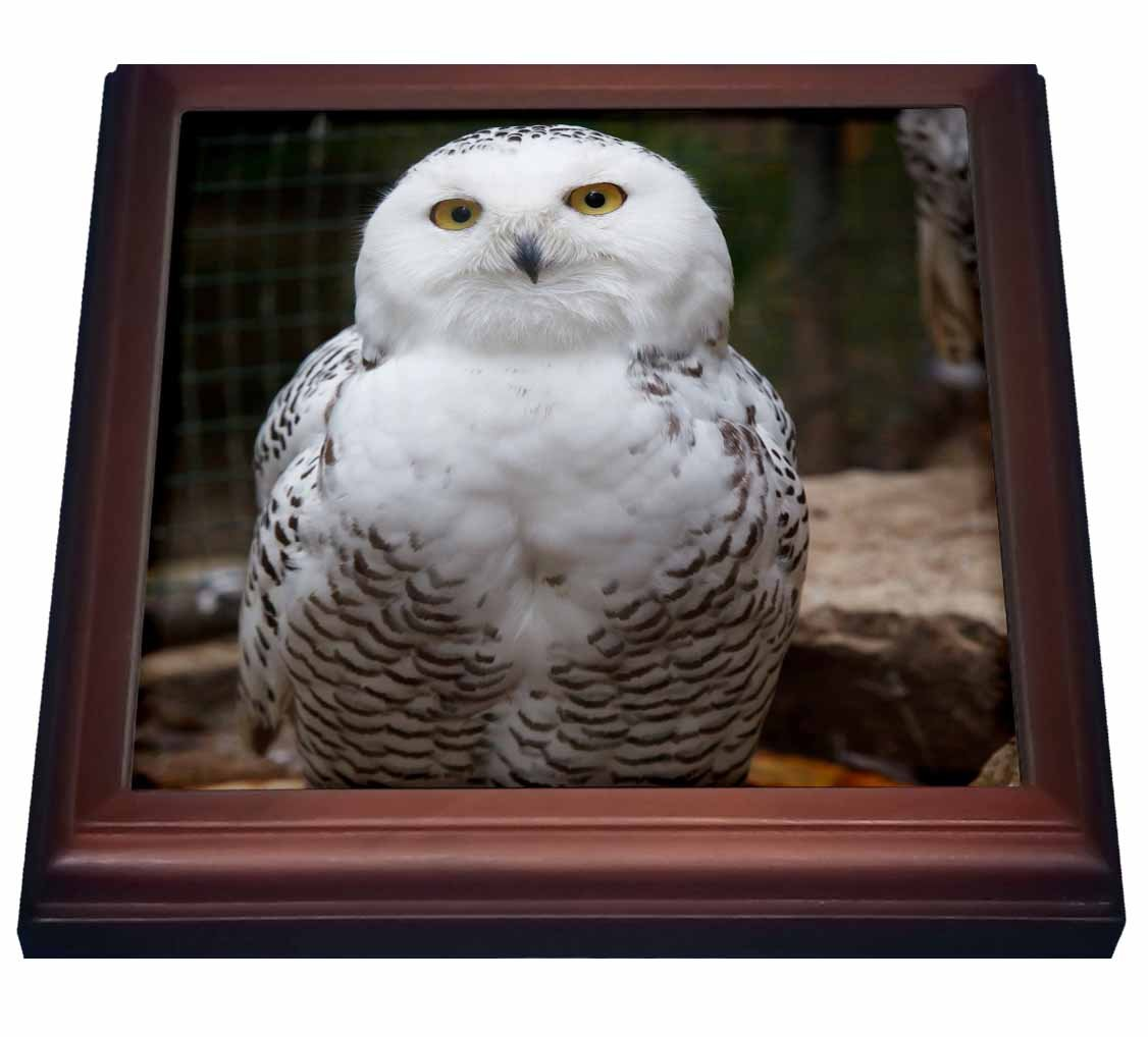 3dRose trv_79143_1 Pretty White Snowy Owl-Birds-Animals Trivet with Ceramic Tile, 8 by 8'', Brown by 3dRose