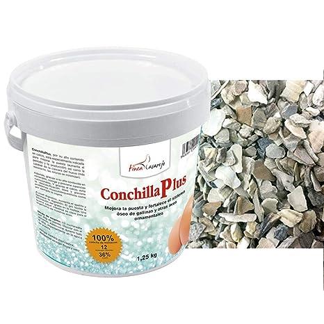 FINCA CASAREJO CONCHILLA Plus - Conchilla de ostra (6): Amazon.es ...