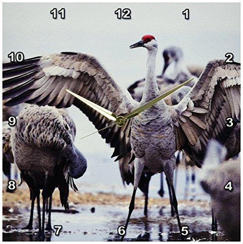 Nebraska Sandhill Crane - 3dRose DPP_92168_2 Sandhill Crane Birds, Platte River, Nebraska - US28 CHA0119 - Chuck Haney - Wall Clock, 13 by 13-Inch