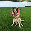 Muffin's Halo Guide for Blind Dogs, Large - Pink