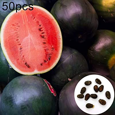 MSlongzc 50Pcs Watermelon Seeds Easy Grow Sweet Summer Fruit Outdoor Garden Yard Farm Field Plant Watermelon Seeds : Garden & Outdoor
