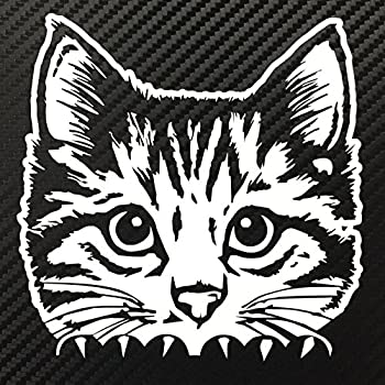 Amazon Com Moving Tail Kitty Car Decal Rear Window And